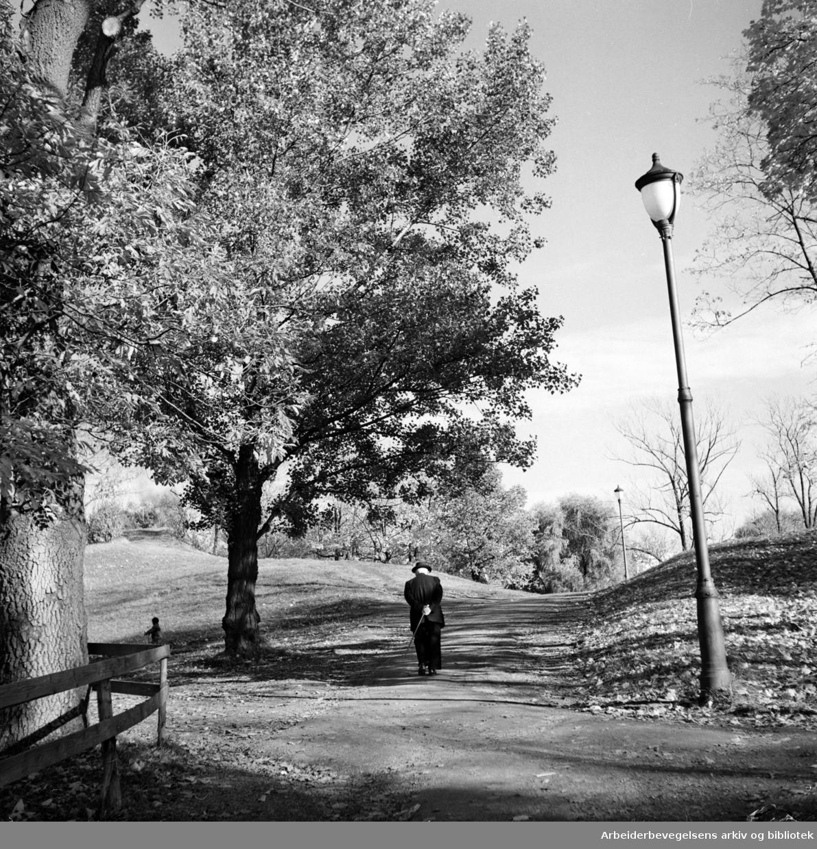 Frognerparken. Oktober 1950