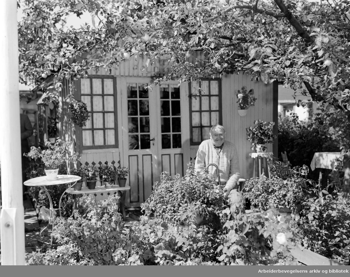 Etterstad Kolonihage. Alfred Andersen. August 1953