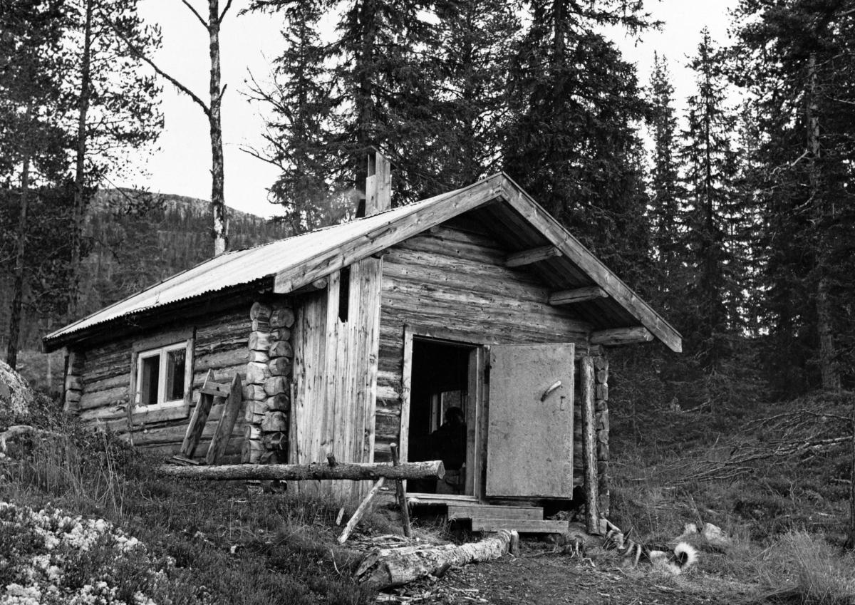 Den såkalte «Toerbua» i Borregaards skoger ved Rognvola i Stor-Elvdal.  Koia er en ettroms laftekonstruksjon med inngangsdør over ut noe utkraget tak på den ene gavlen.  Da dette fotografiet ble tatt sto det finerbeslåtte dørbladet åpent.  Bua hadde torams vindu på langveggen.  Saltaket var tekket med bølgeblikk. På mønet skimtes en trelur for lufting og et jernrør som tjente som røykavløp for ovnen inne i bua.  Ved hjørnet av bua sto en sagkrakk, lagd av en tømmerstokk med inntappete bein på undersida og kortere knagger som skulle tjene som anleggspunkter for vedstokkene.  En slik stokk ligger foran sagkrakken.  Inntil koias langvegg er det reist en kort slede.  Ved hjørnet av bygningen ligger en elghund.  Bua sto i skrånende terreng, omgitt av gran- og furuskog og ei enslig bjørk.  I bakgrunnen skimtes fjellet Rognvola, der toppen rager snaut 1 000 meter over havet.  Fotografiet er tatt i forbindelse med at koia ble brukt som jakthusvære i oktober 1962.