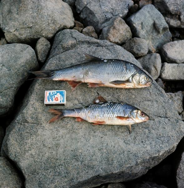 fisk i dammen dating artikler om karbon dating