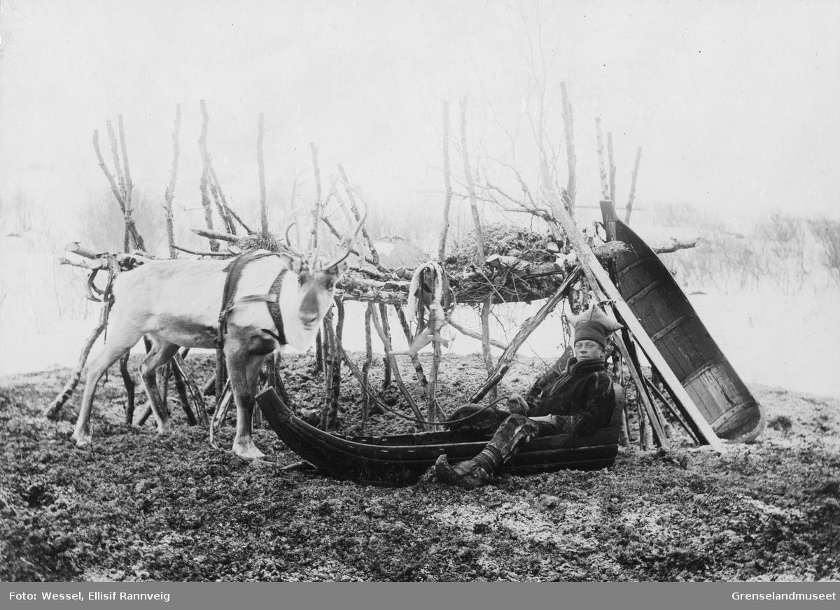 Ole Johnsen Must med sin kjørerein og pulk ved mosekraken på Solheim, vinteren 1896