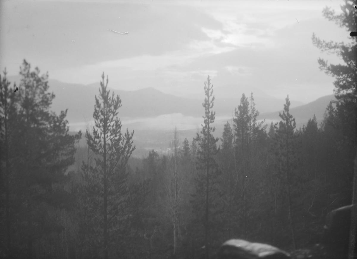 Oversiktsbilde over skog og dalbunn. Noe difust