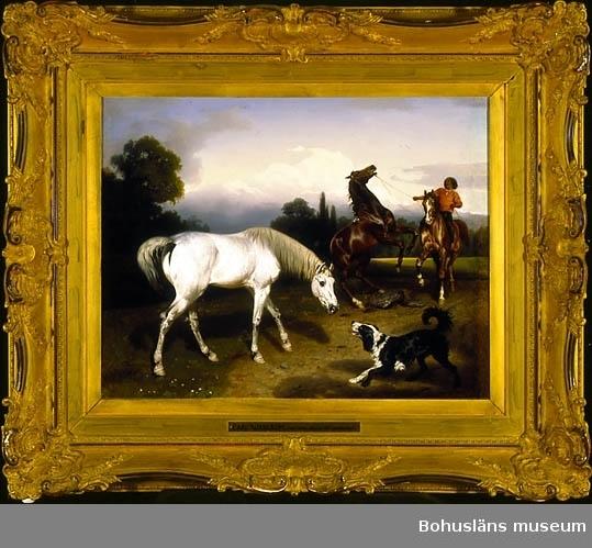 Hästar, ryttare och hund i naturen på landsbygden som omger Rom, Italien. (Romerska campagnan; Campagna Romana.)