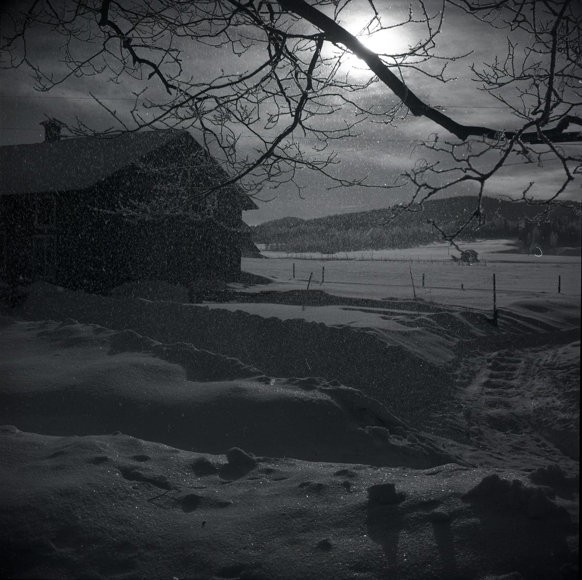 Fallande rimfrost vid slakteriet i Sunnanåker, vintern 1948.