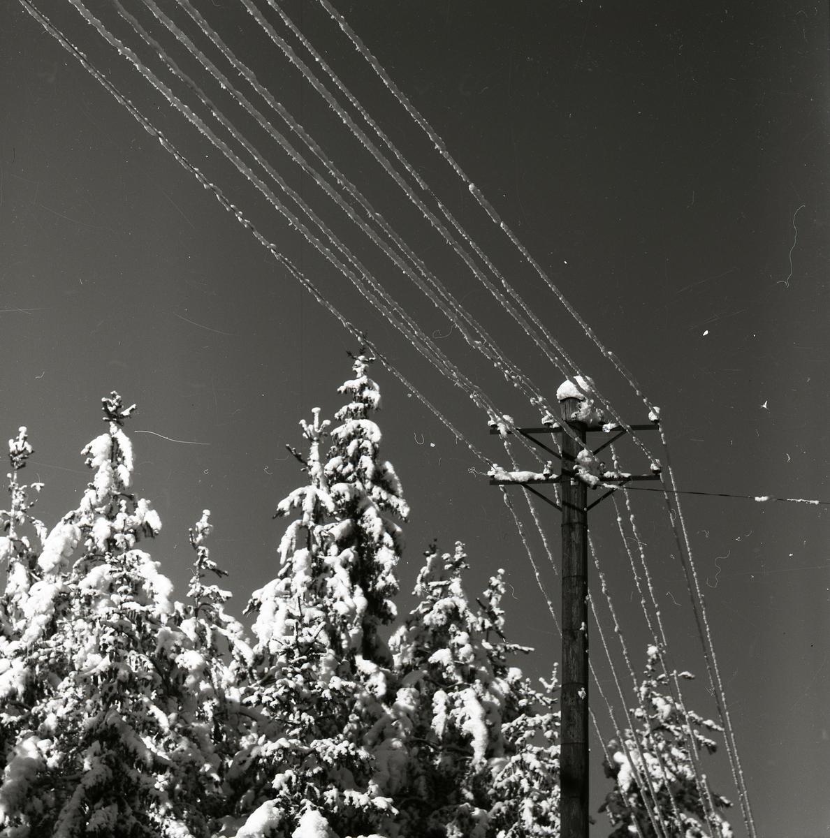"""Snö """"uppläga"""" på telefontrådar vid skogen i februari 1955."""