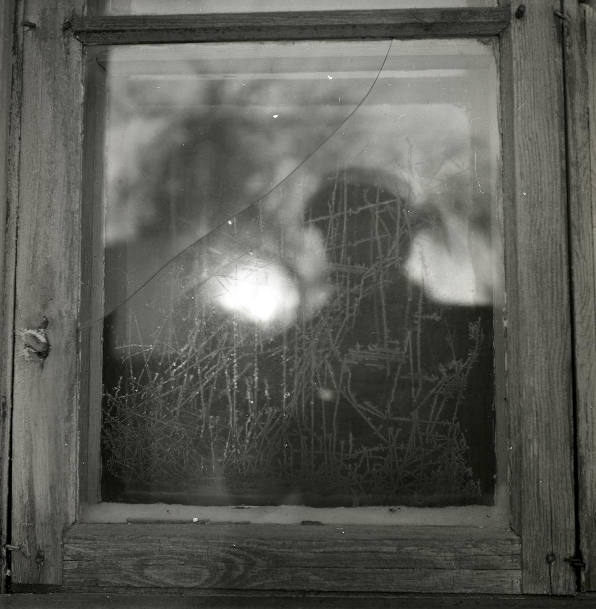 Rimfrostmönster på sprucket fönster, fotograferat någon gång mellan 1945 och 1952 eventuellt i Mo.