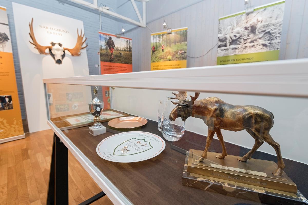 Detalj fra utstillingen «Når elghund er best» på Norsk skogmuseum.  I forgrunnen ser vi en glassmonter med premier fra elghundutstillinger - en pokal, et fat, en tallerken, et par krystallvaser og en liten elgskulptur.  Utstillingen er lagd til 100-årsjubileene til Hedmark elghundklubb i 2018.  Den består av seks rollup-plansjer med fotografier og tekst som forteller om elghundrasene og om bruken av dem, samt om de to jubilerende for elghundentusiaster.  I sentrum av montasjen står det en kvit skjerm med utstillingens tittel og et stort trofégevir.  Utstillingen ble ferdigstilt til De nordiske jakt- og fiskedager på skogmuseet i august 2018.
