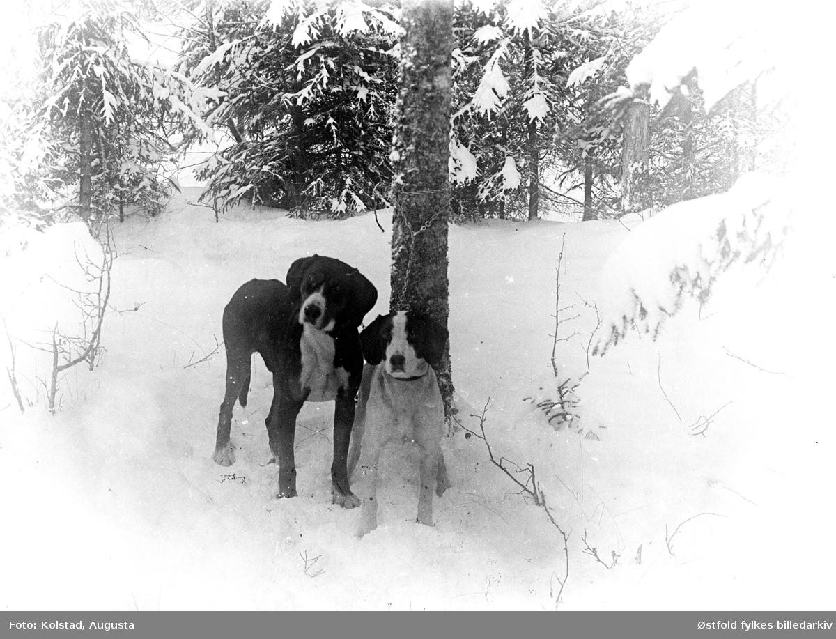 Hund i vinterlandskap.