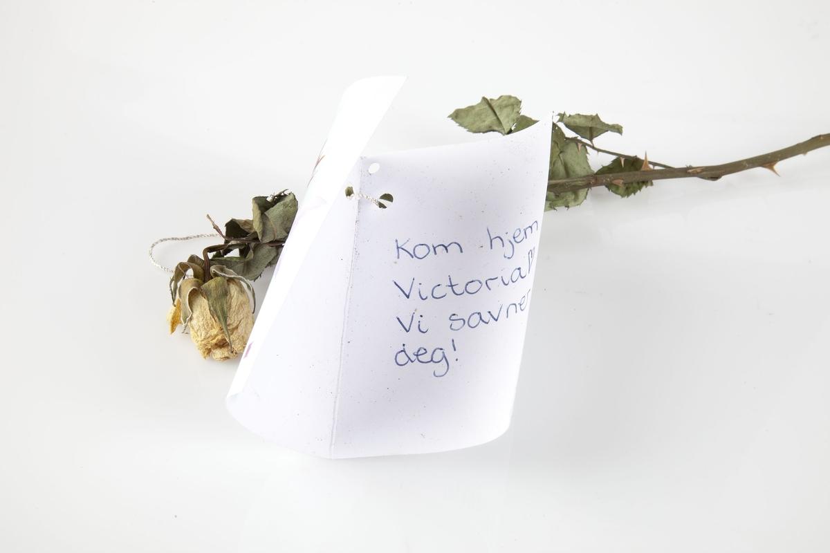 Rose innsamlet etter terrorhandlingen 22. juli 2011 fra minnesmarkeringene i Lillestrøm.   Rosen er nå helt tørket inn, den har nok vært ganske hvit, men er gulnet. Flere sett med blader er bevart. Stilken har torner. En sølv/gulltråd er viklet rundt rosen og holder kortet og rosen sammen. Kortet har en dus lilla lilje som hovedmotiv. I bakgrunnen er felt med grønt og blått. Originalt er kortets billedmotiv malt som akvarell. Teksten er skrevet med blå kulepenn.