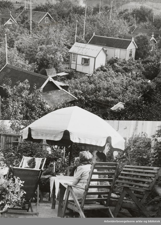 Vålerenga. Kolonihagen på Etterstad. September 1946