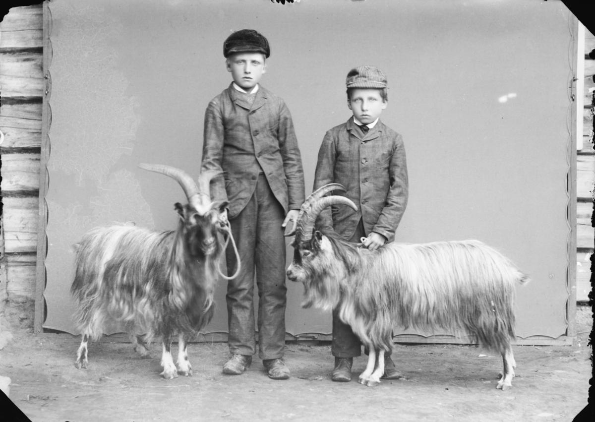 Brødrene Ole S. og Otto S. Ramstad med geitebukkene