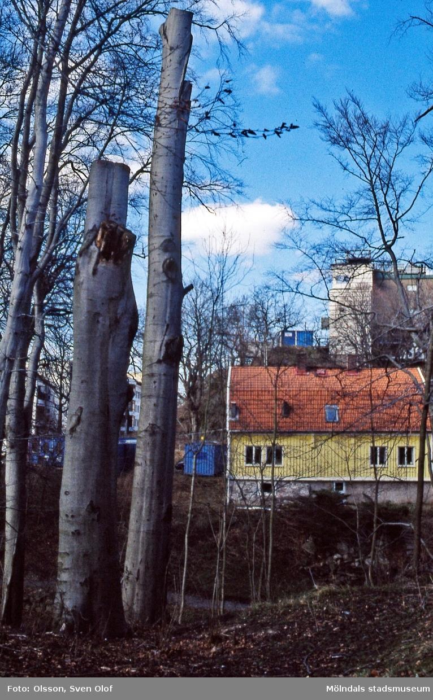 Lackarebäck i Mölndal, år 1998. Någon har sågat ner grenar på träd norr om Ericssons paviljoner. Är det ett sätt att få dem att dö? I bakgrunden ses mangårdsbyggnaden till Lackarebäcks gård.