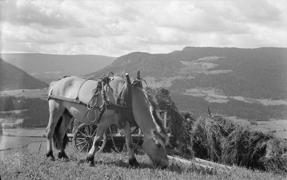 Hest med høykjerre - sett fra Nordre Einstad mot Tålåskardet