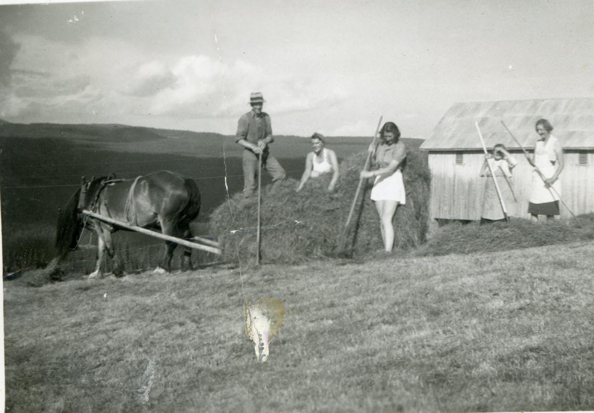 Høygjøring på Stuveset 1945. fråv.Hermann Liahagen,Martha Bergly,Berit Bergly,Rangdi Rust Stuveset og Guri Haugen.