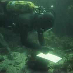 Dykker under utgravingen av slaveskipet 'Fredensborg' i 1975