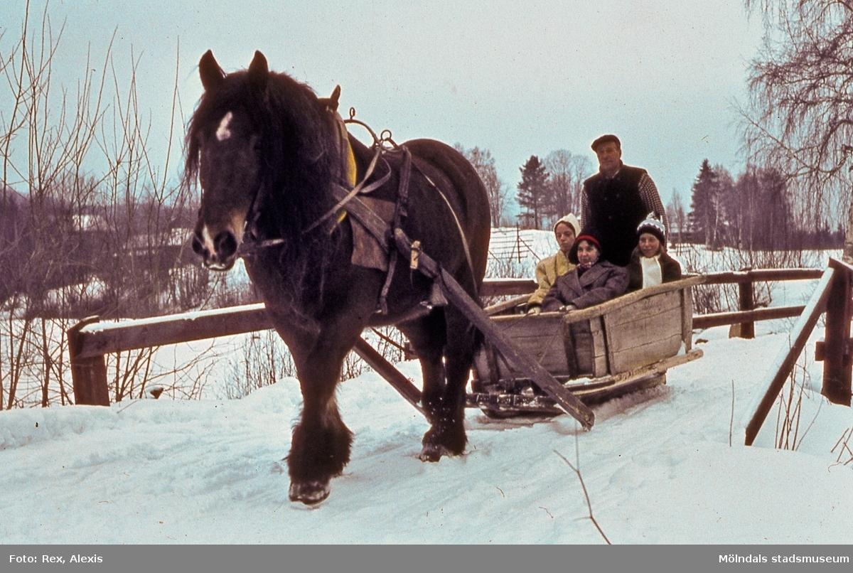 Vinter i Mölndal, år 1964. En gödselsläde med häst och kusk. AF 14:18.