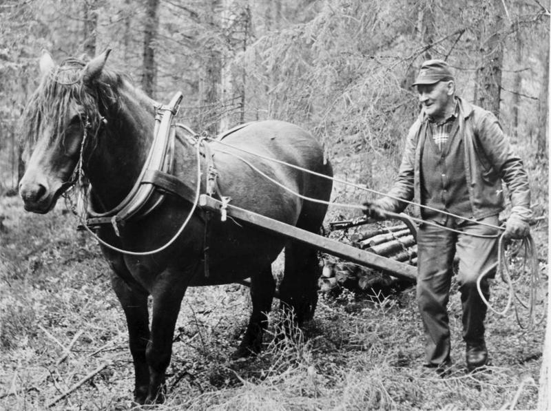 Lunning på barmark med lunningsdrag, hest og kar; stor vending. Andrå, Rendalen.1982. Vedkjøring. Petter Skogholt. MINØ.43877 (Foto/Photo)