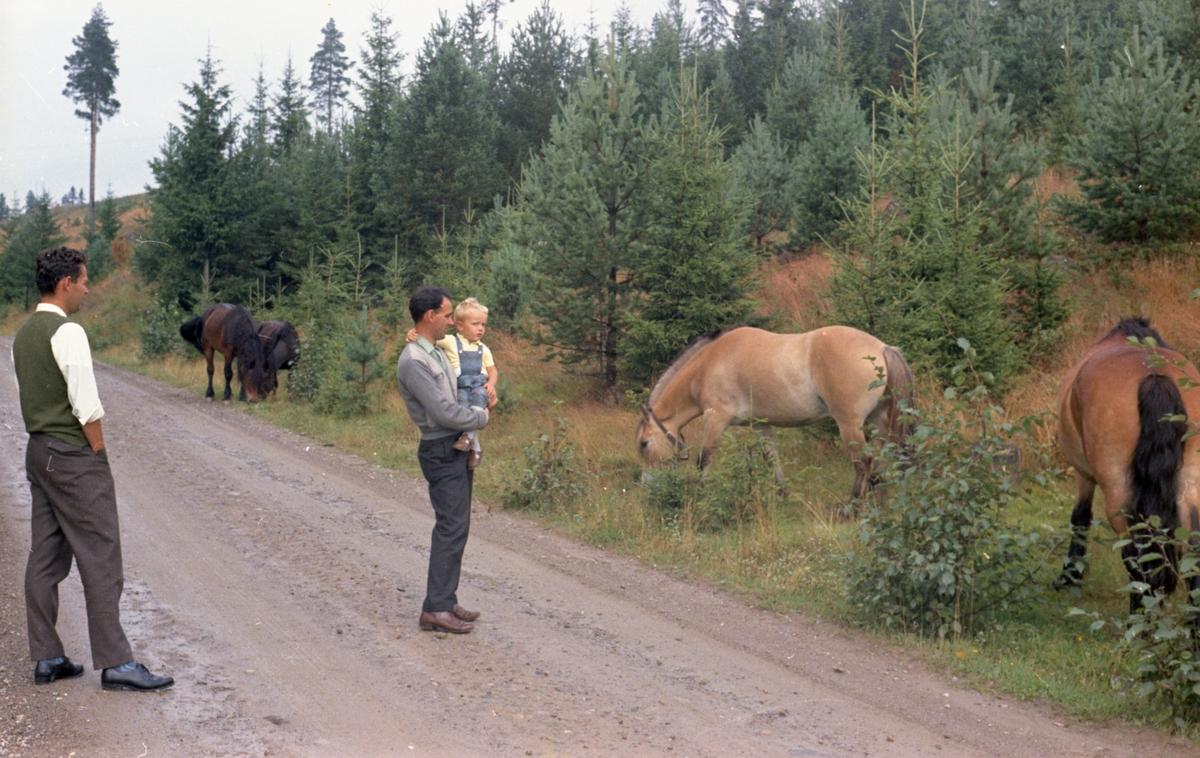 Hester på Hamar. Fargeneg. foto H. Skirbekk