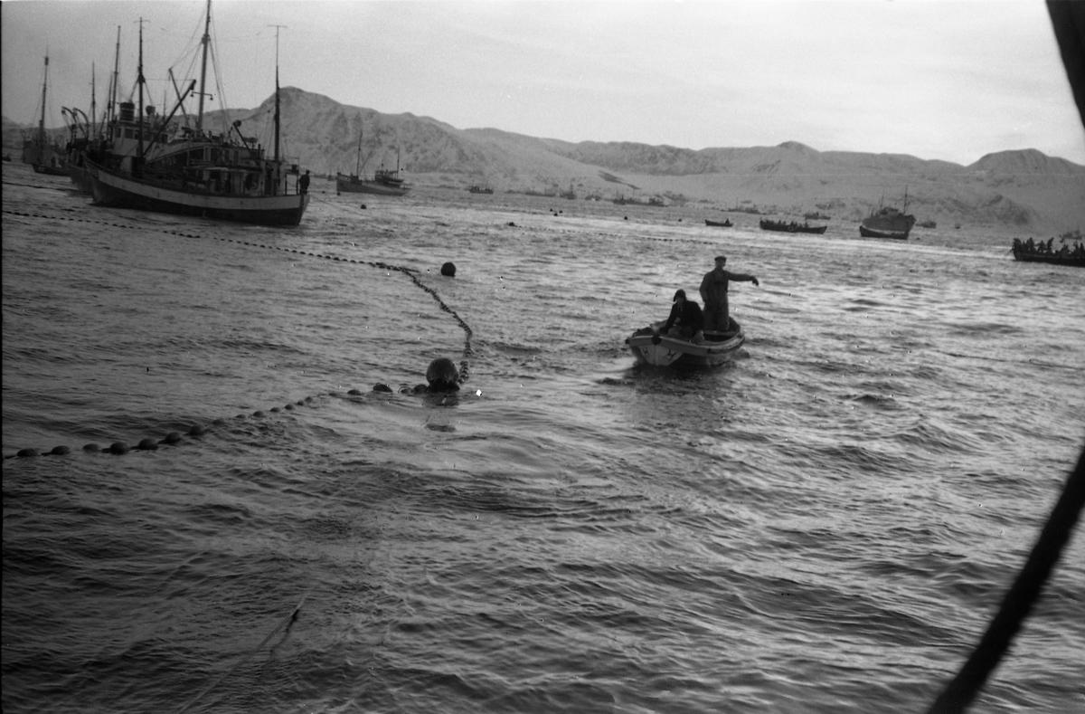 Tre avfotograferte bilder som muligens er tatt fra ei fiskeskøyte. I bakgrunnen ser en flere fiskeskøyter.