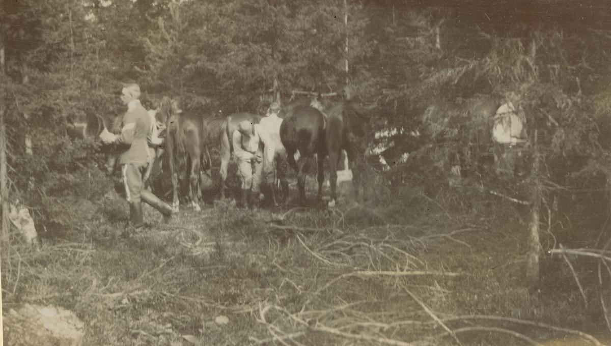 Elever vid Kavalleriskolan ryktar hästarna i skogen, Umeå.
