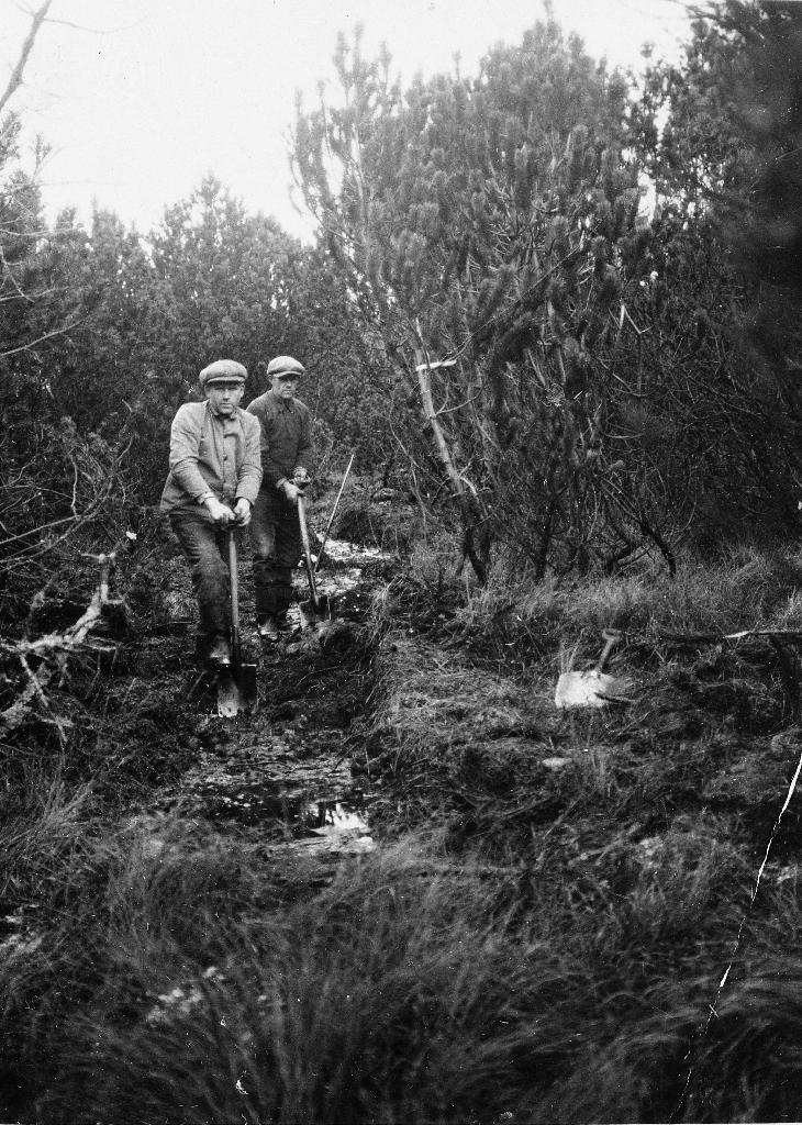 Jesper Tjensvoll og Tollak Sikveland på skogsarbeid i Njåskogen