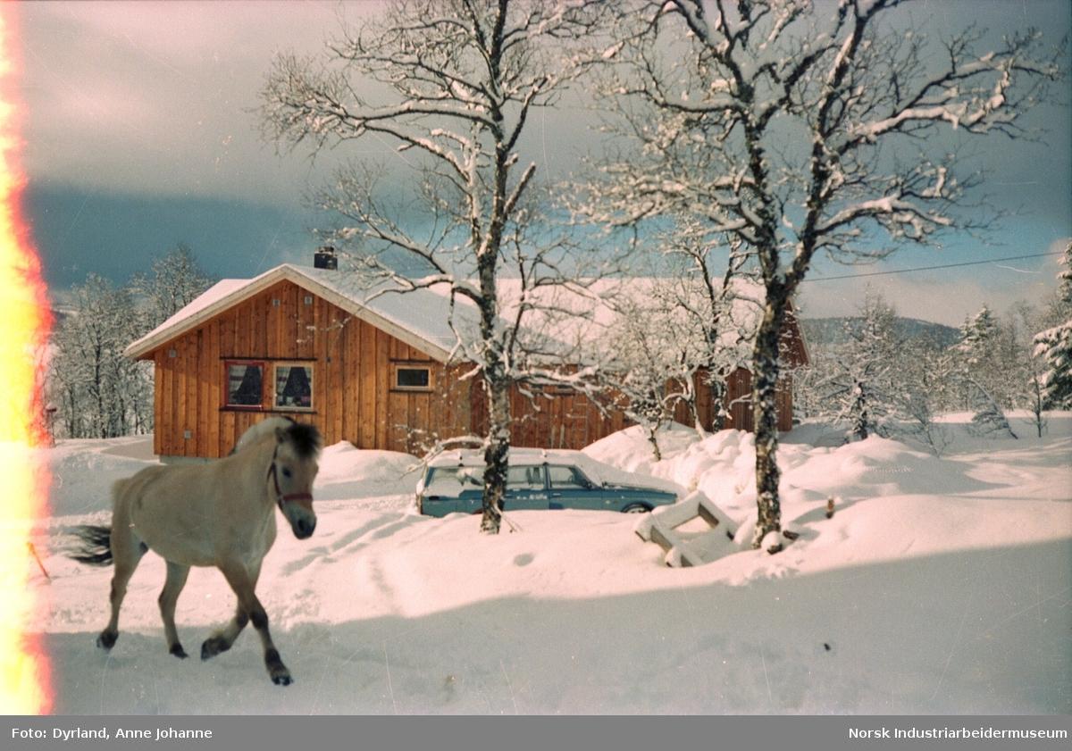 Fjordhest i snøen foran bolighus og bil på Bjønnli på Skinnarland