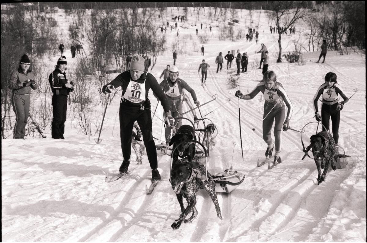 Skiløpere med hund i løypa under et hundeløp