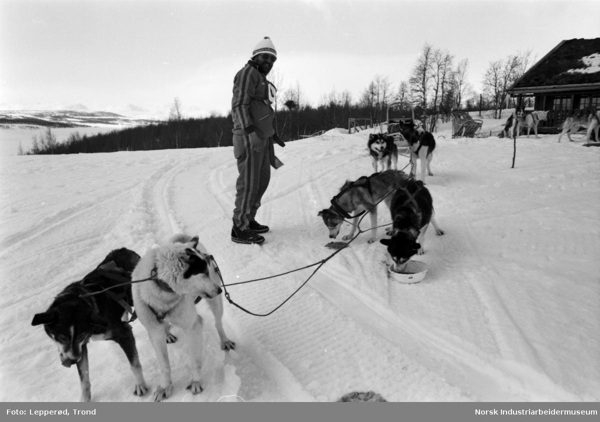 Det er polarhund-løp over Hardangervidda, arrangert av Norsk Polarhundklubb. På Sundet ved Møsvann er 2. kontrollpost.