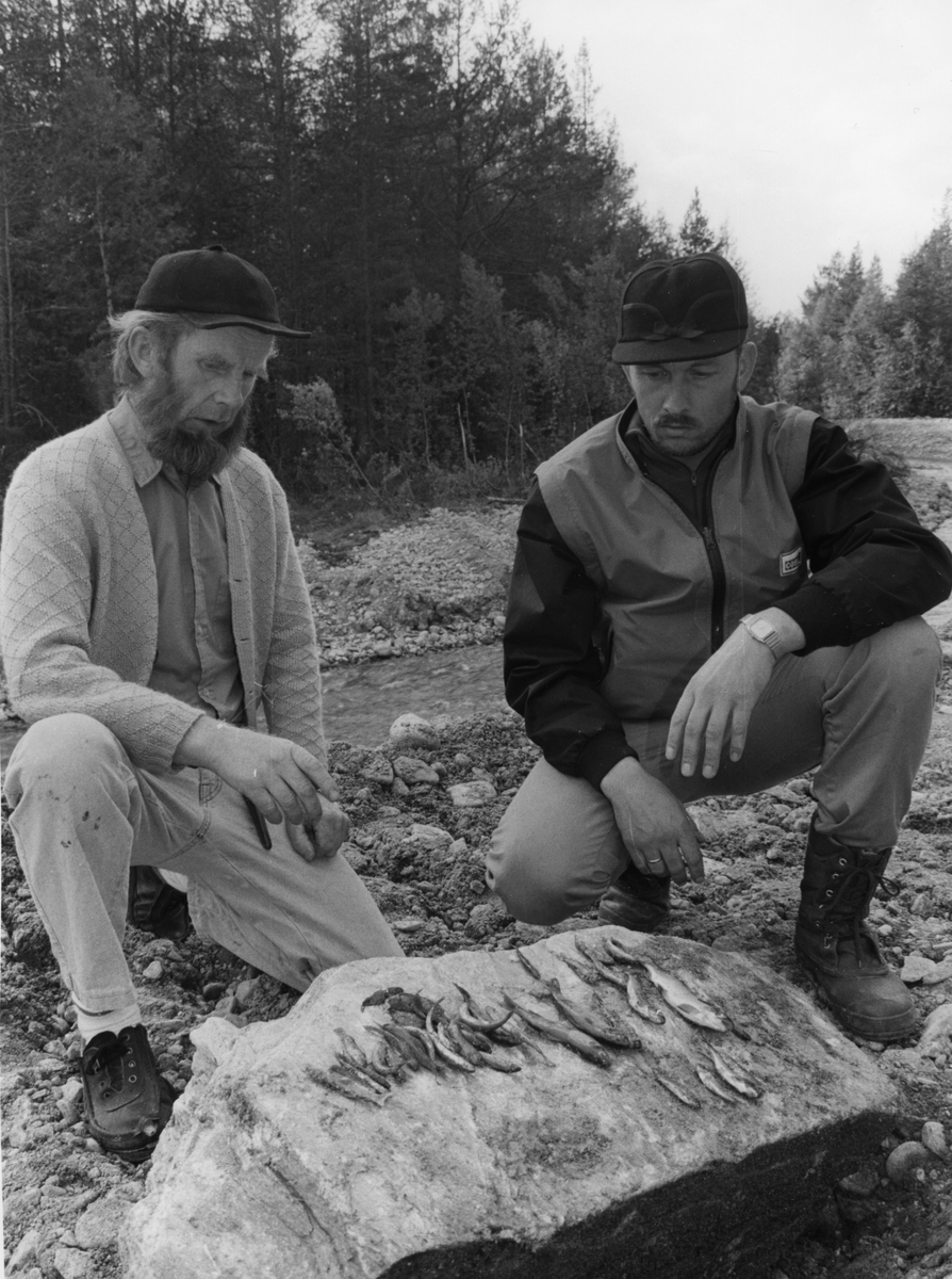 Fiksedød Auma. Arne Dagfinn Øynes og KJell S. Øverland