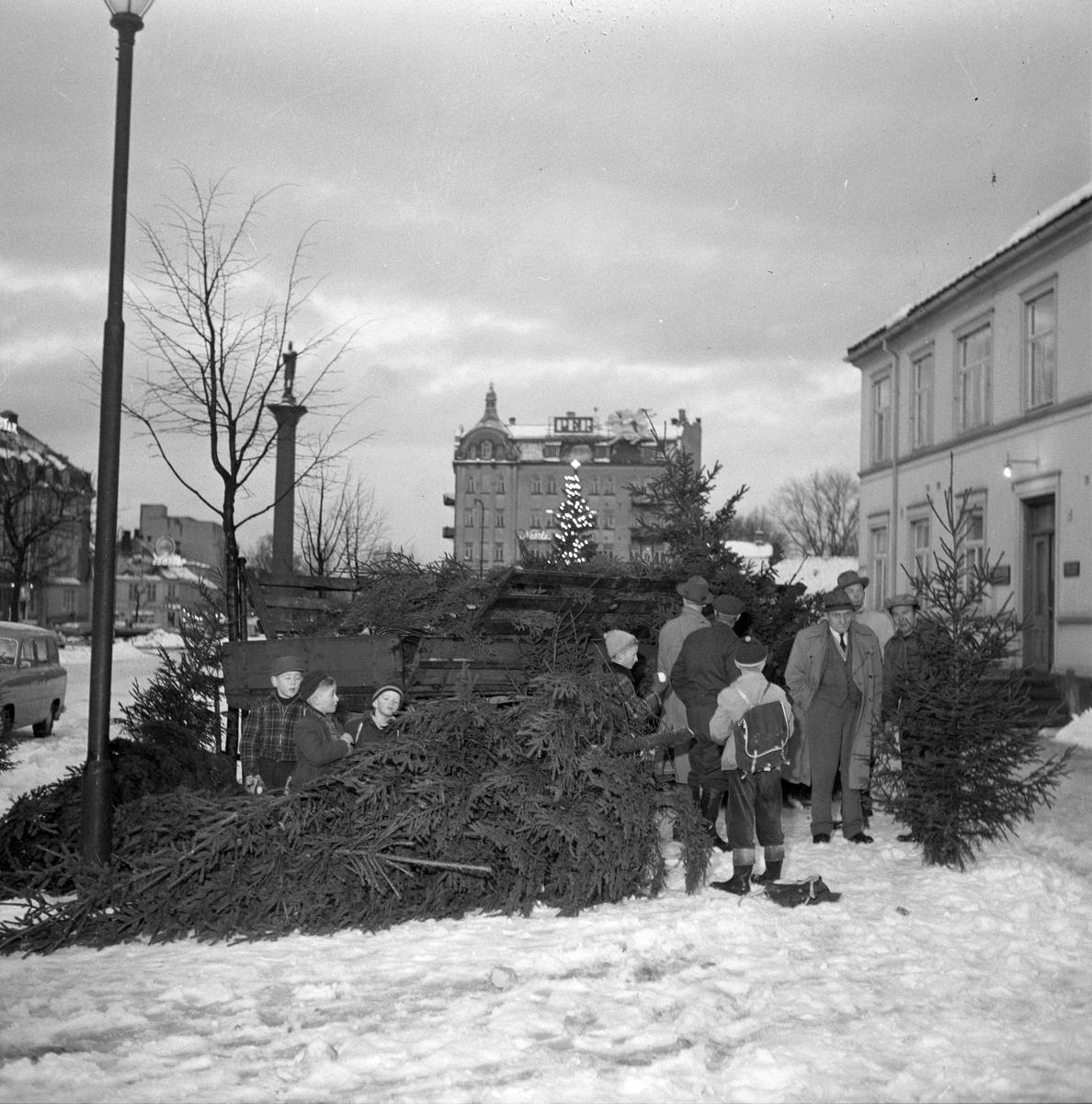 De første juletrær på plass på Torvet