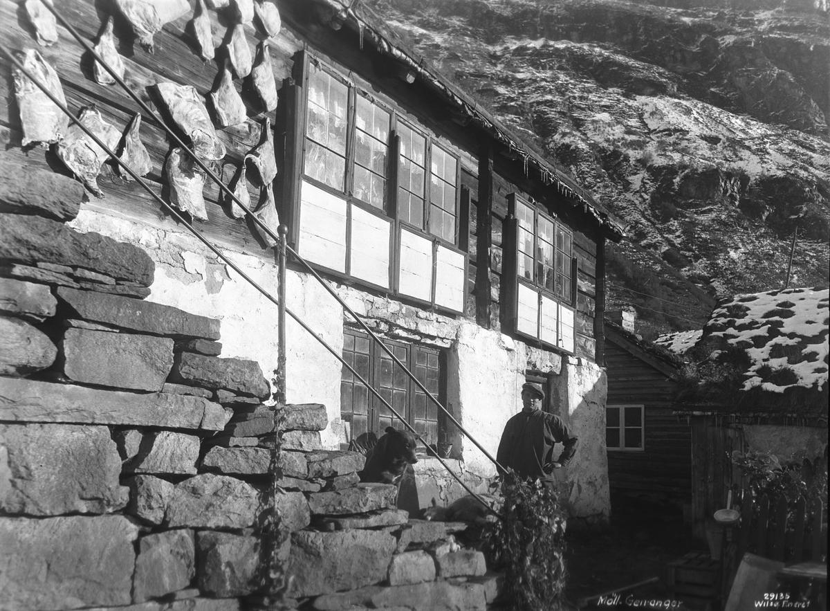 Prot: Saueslagtning, Møll