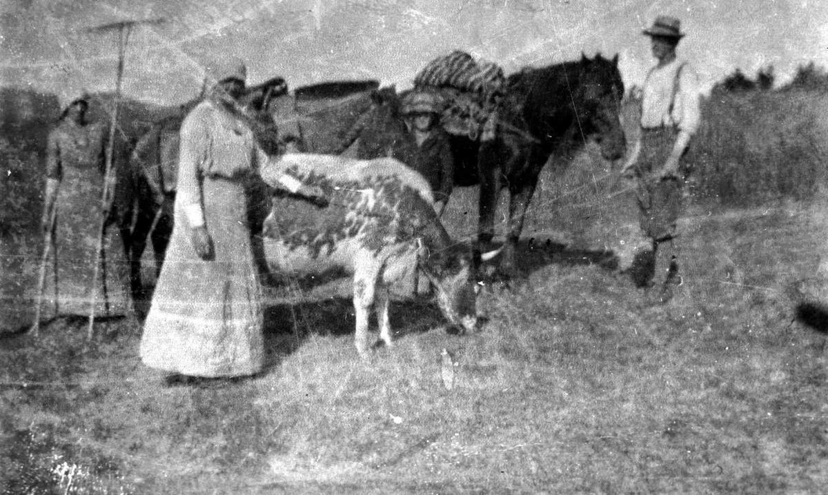 Åmlibilder samlet av Åmli historielag Haugdalen