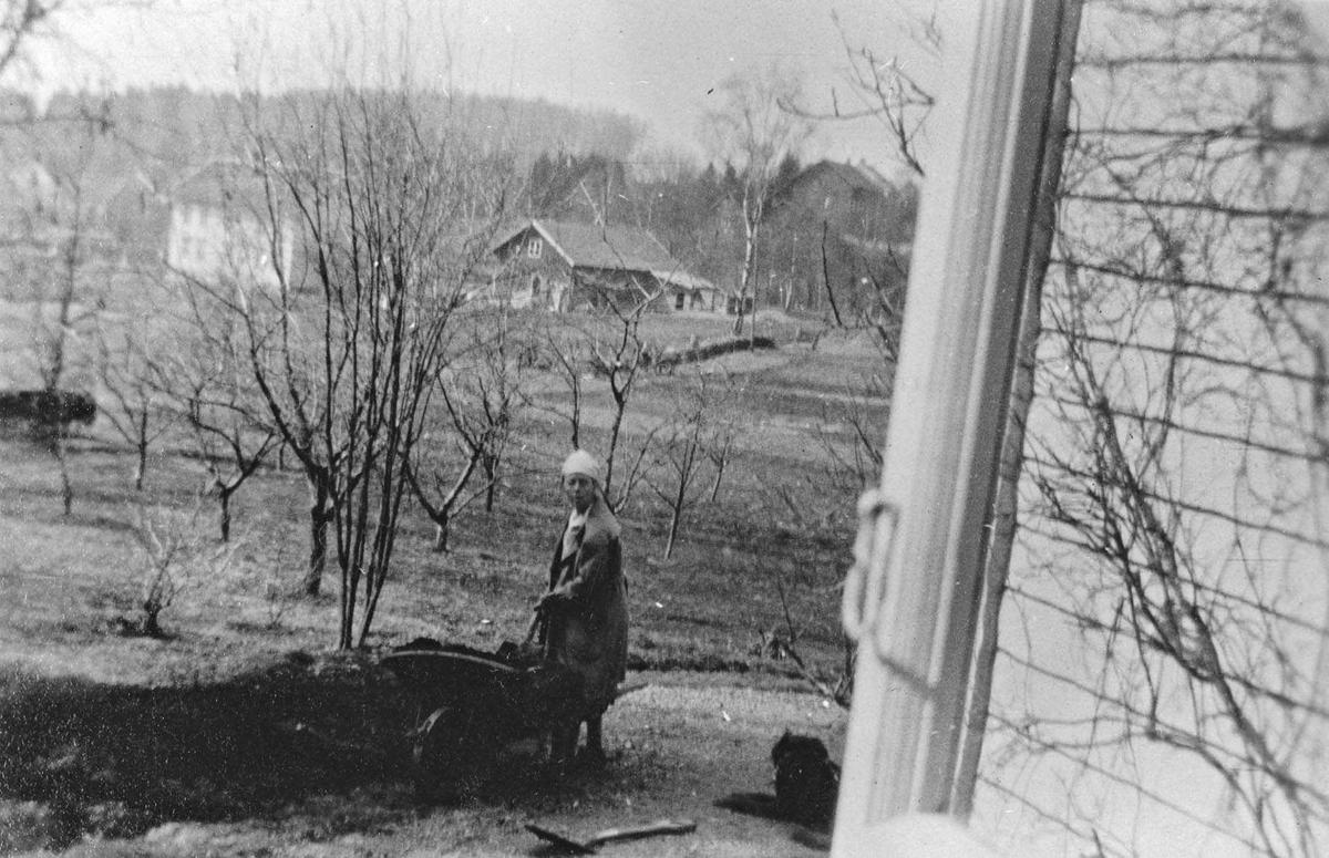 Fru dr Eger(Callik) arbeider med gjødsel i haven, våren 1927.