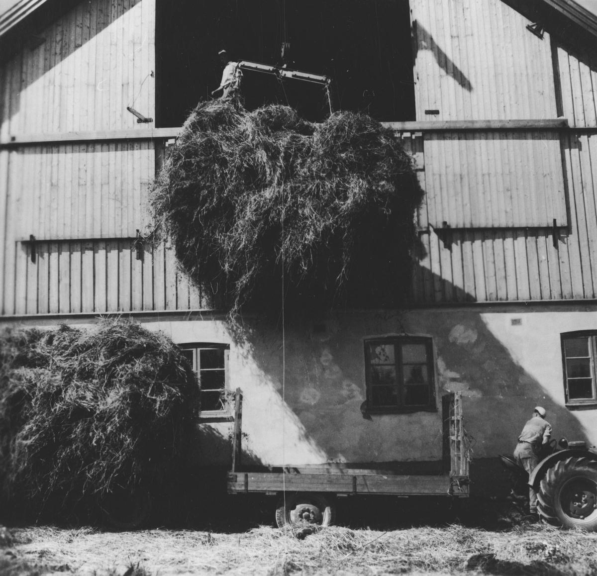 Høykjøring med traktor og to tilhengere, Høyet heises inn på låven. Slåttonn.