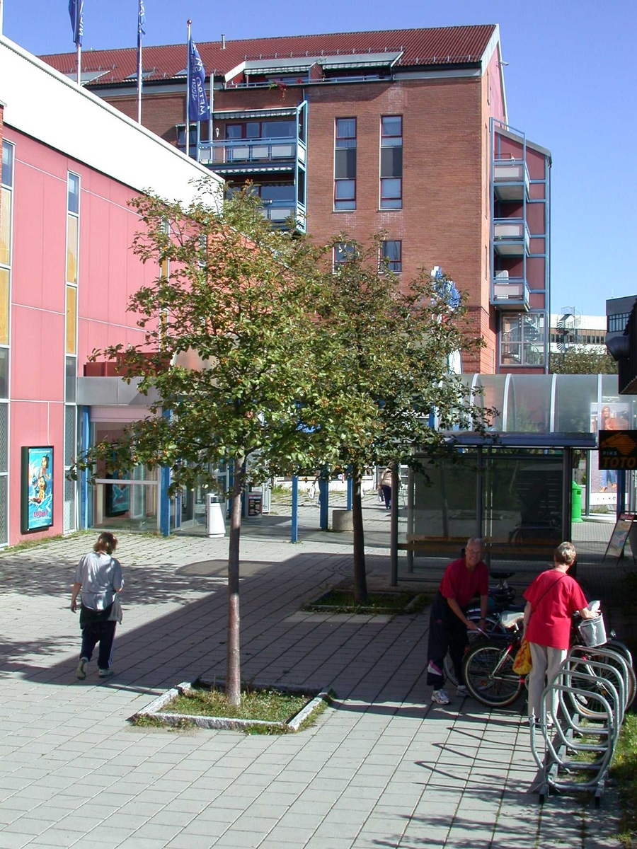 Trær ved bakinngangen til Metro Fotovinkel: NV