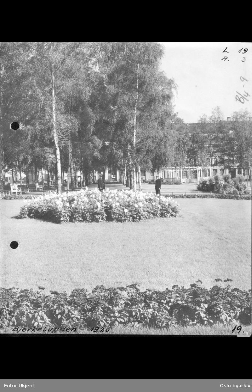 Birkelunden park med plenvekster, pergola og park-trær.