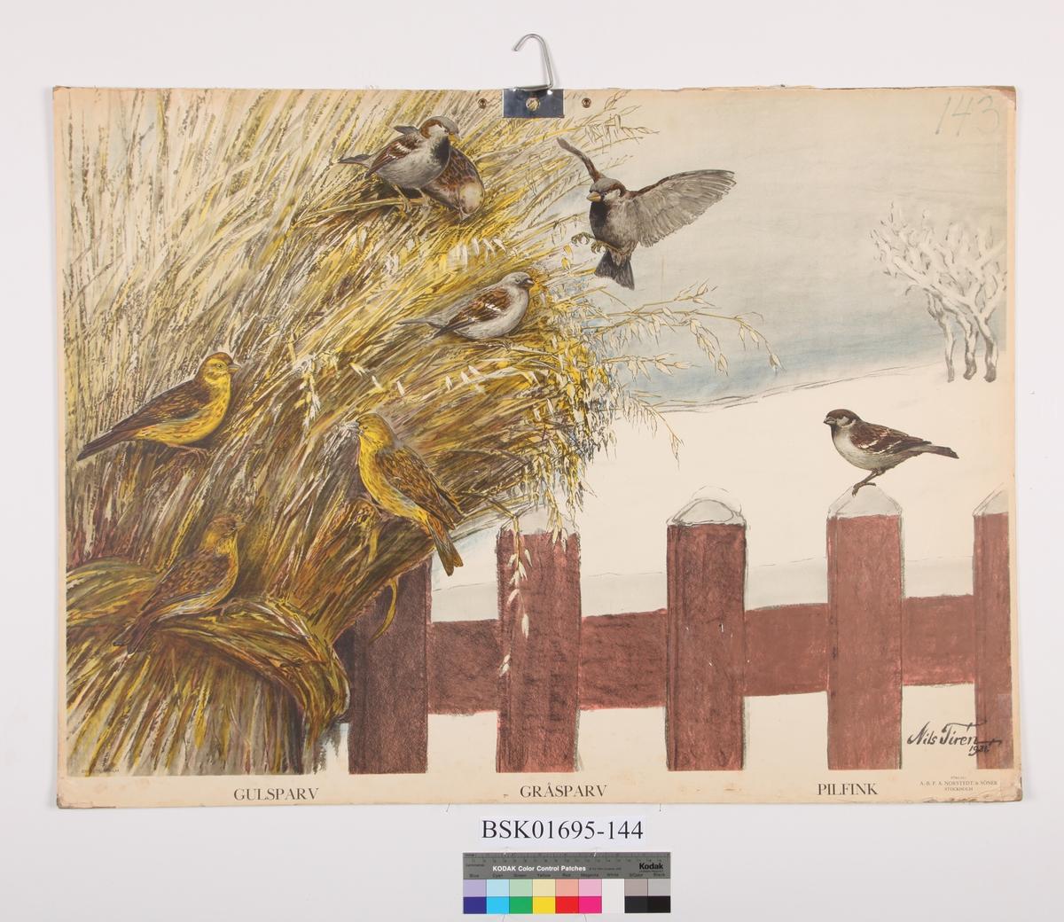 Fuglenek med fugler