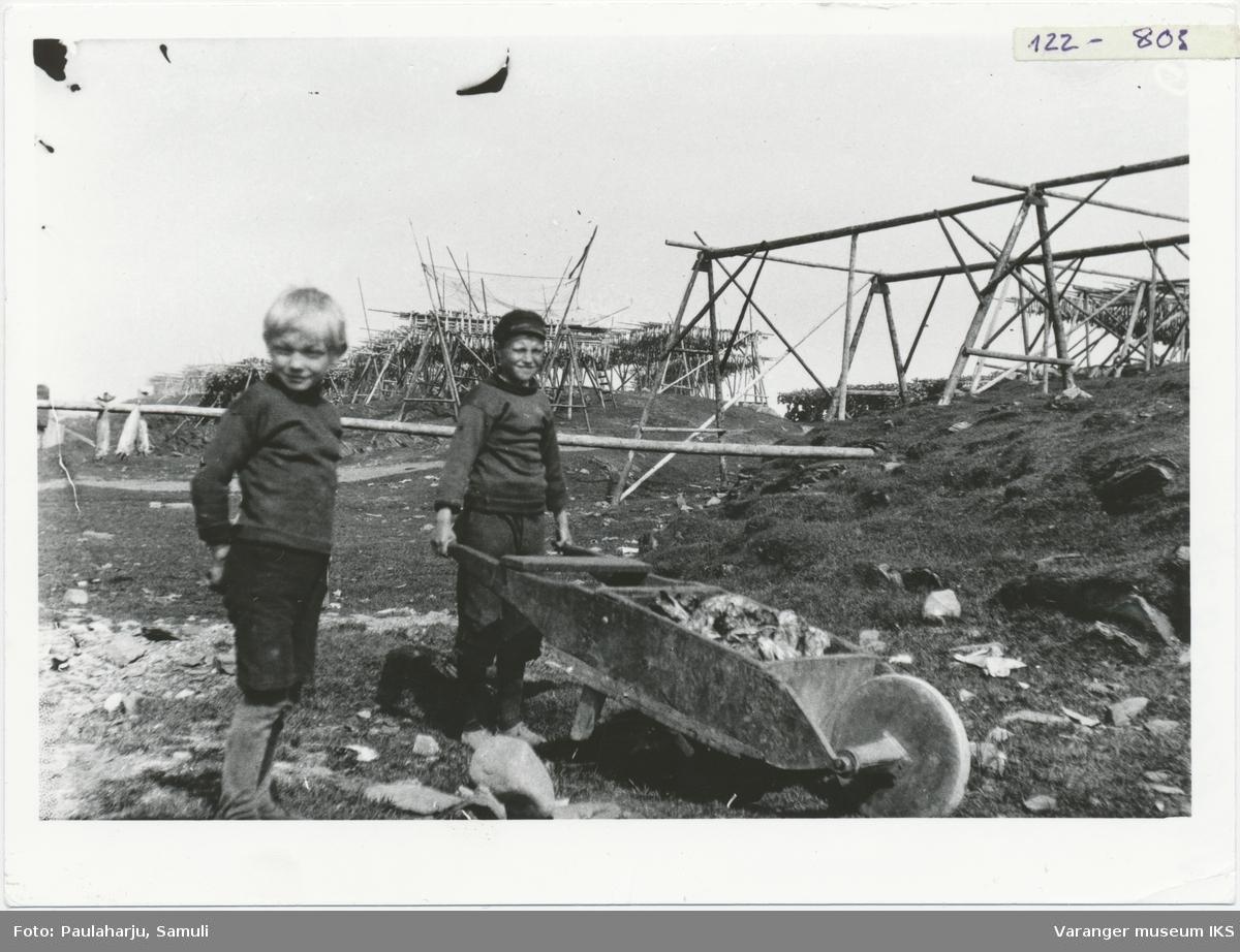 To gutter med trillebår samler fiskehoder som har falt ned fra hjellene