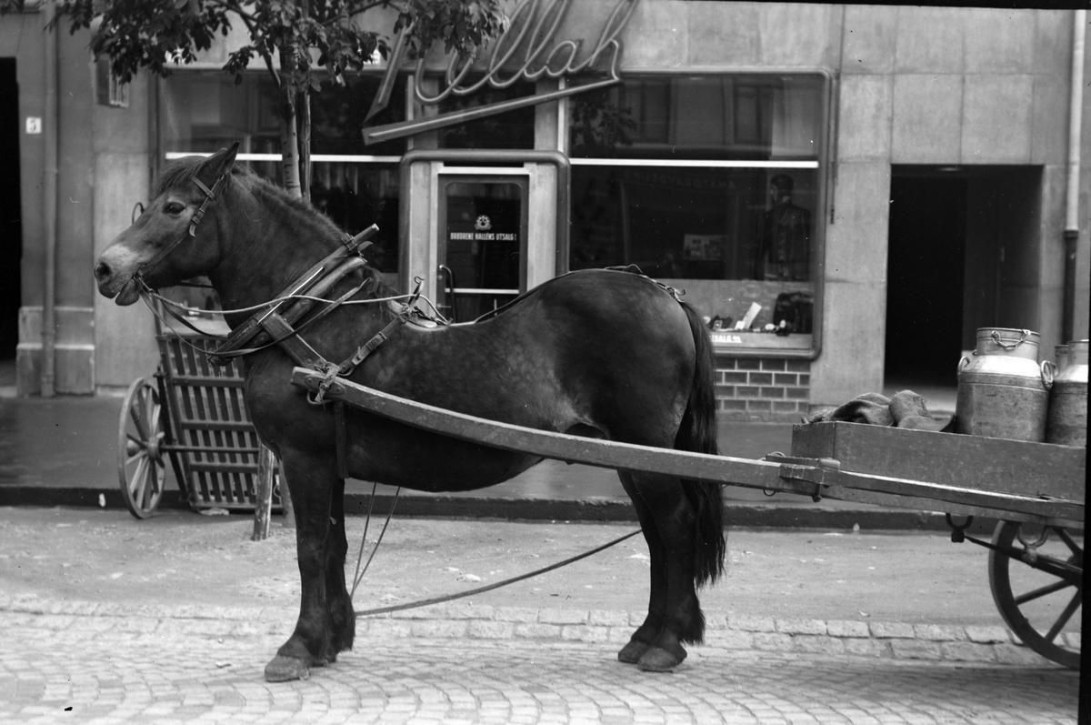 Hest med vogn fotografert utenfor Hallèns Utsalg i Nordre gate.
