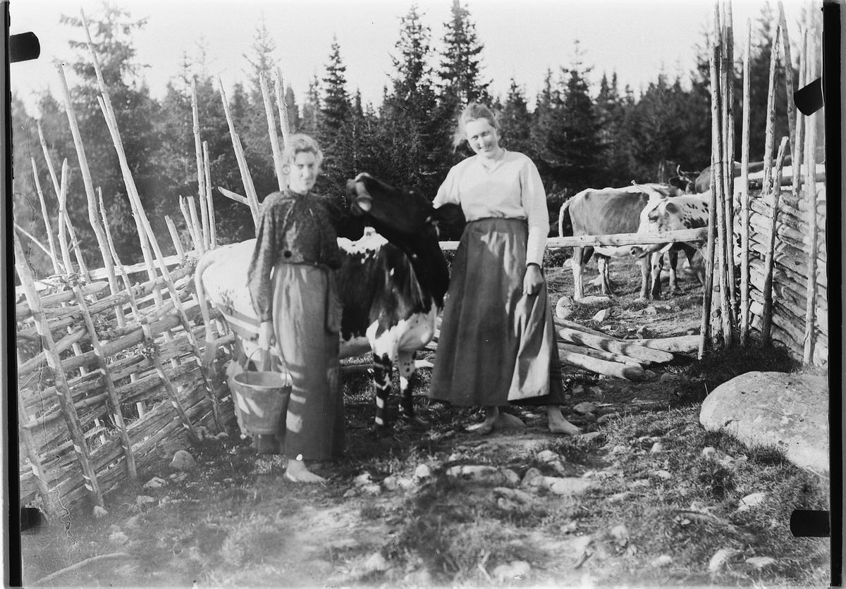 To kvinner med ei ku, ene kvinnen med ei sinkbøtte. Skigard, kuer.