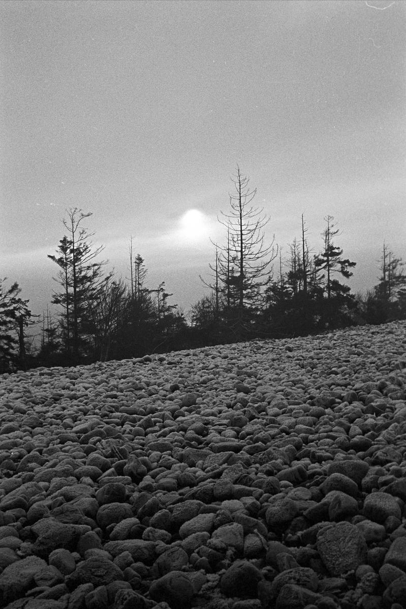 Serie. Hus og strender på Jomfruland, Kragerø, Telemark. Fotografert des. 1963.
