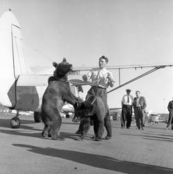 To bjørner sammen med Snorre Kjetilson ved et fly av typen N