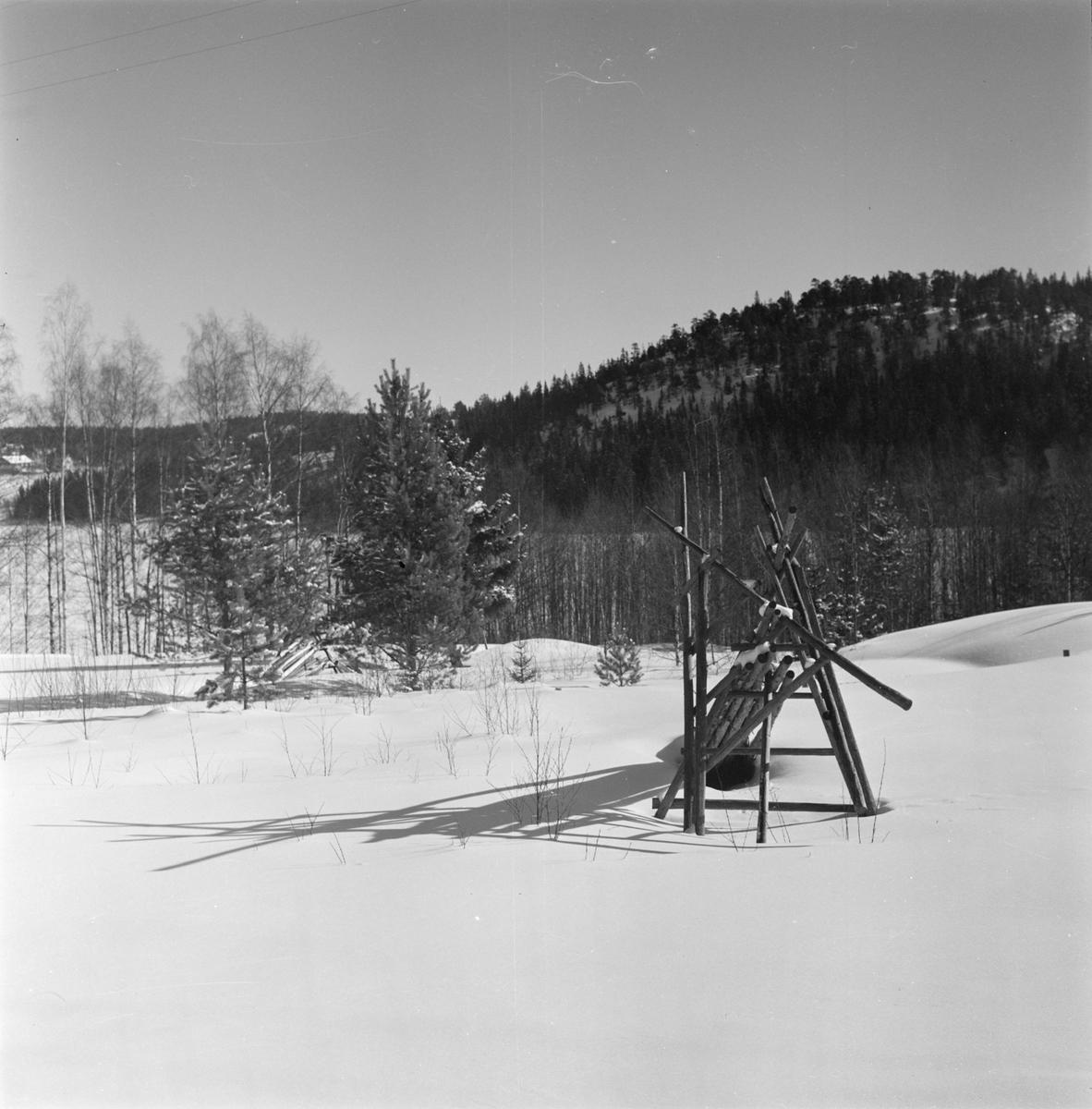 Hässja på vintern, sannolikt i Gävle, Gästrikland