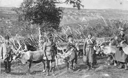 Fem personer sammen med reinsdyr i mjølketrø. I bakgrunnen e