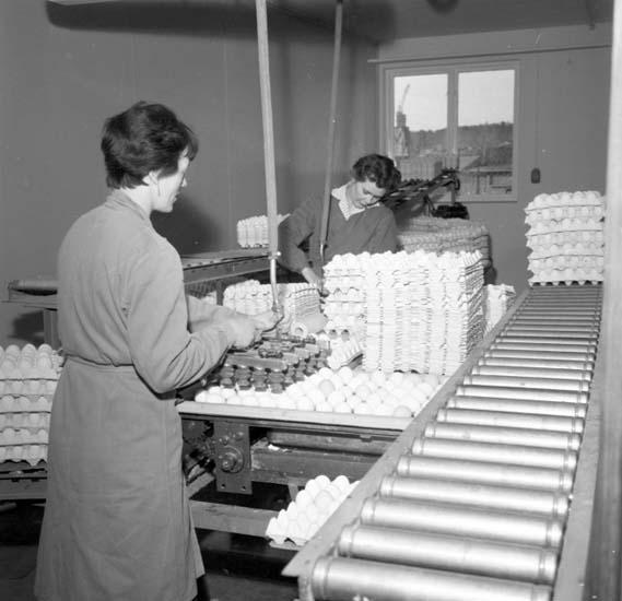 Packning av ägg på Äggcentralen, Uddevalla, i mars 1959