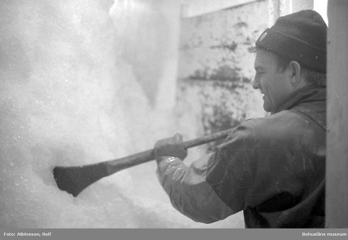 """""""Isbingen i lastrummet. Harald Hansson hackar loss is till räk och fisk. Man isar varje vecka i Kungshamn. Den isen räcker i regel hela veckan ut"""" enligt fotografens notering."""