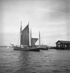 Galeaser sätter segel