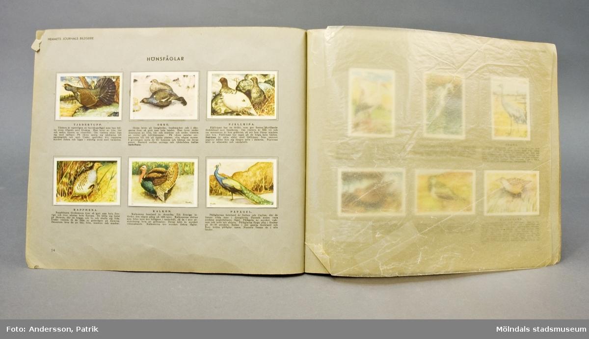 """Boktitel: """"Bilder ur djurvärlden""""Text av överläkare A. Hagnell. Bilder av Tor Fredlin. Utgiven av Hemmets Journal."""