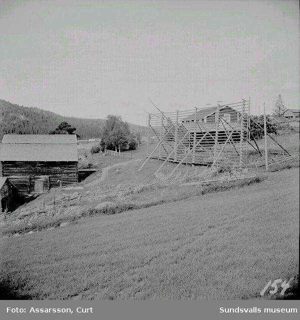 Storhässjan vid medelpadsgården, bild från Frötuna.
