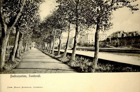 Allén efter Selångersån i Badhusparken i Sundsvall, brevkort.